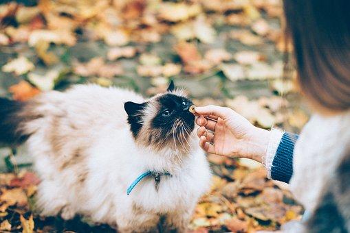 Un chat équipé d'un colier GPS