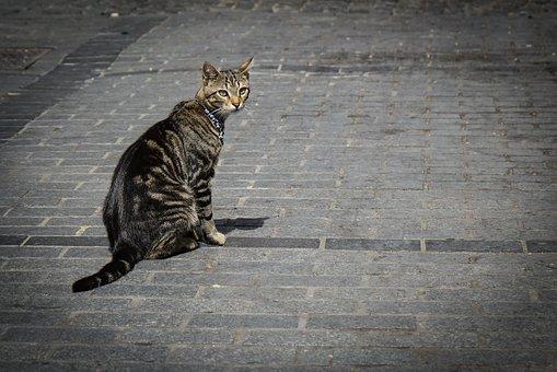 Un chat dans la rue retrouvé grace à un collier GPS