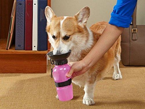 Gourde pour chien DryMartine